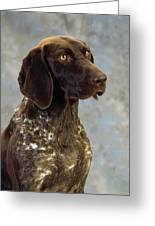 German Pointer Portrait Of A Dog Greeting Card