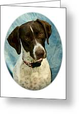 German Shorthaired Pointer 088  Greeting Card