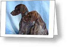 German Shorthaired Pointer 306 Greeting Card