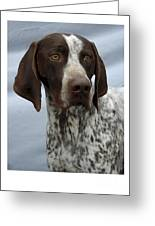 German Shorthaired Pointer 442 Greeting Card