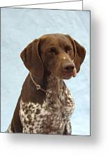 German Shorthaired Pointer 740 Greeting Card