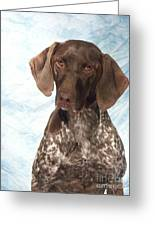 German Shorthaired Pointer 953 Greeting Card
