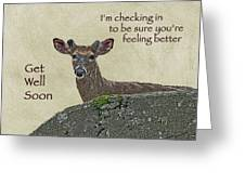 Get Well Card - Whitetail Deer In Velvet Greeting Card