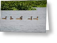 Get Your Ducks In A Row Greeting Card