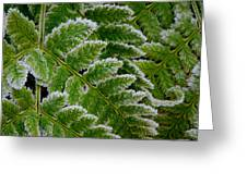 Getting Colder Greeting Card
