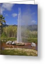 Geyser Napa Valley Greeting Card by Garry Gay