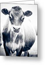 Ghost Cow 1 Greeting Card