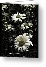 Ghostly Daisies Greeting Card