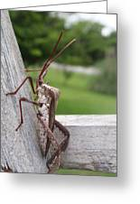 Giant Assassin Bug Greeting Card