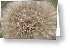 Giant Dandelion Greeting Card
