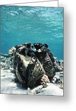 Giant Giant Clam Greeting Card