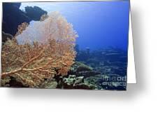 Giant Gorgonian Coral Greeting Card