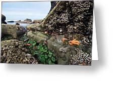 Giant Green Sea Anemone Anthopleura Greeting Card