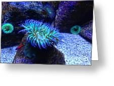 Giant Green Sea Anemone Greeting Card