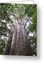 Giant Kauri Grove Greeting Card