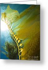 Giant Kelp, Catalina Island, California Greeting Card