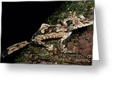 Giant Leaf Tail Gecko Greeting Card