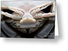 Giant Marine Isopod Greeting Card