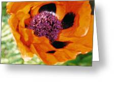 Giant Orange Poppy Greeting Card