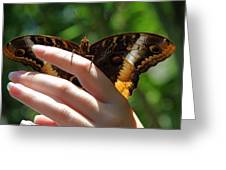 Giant Owl Butterfly In Hand Greeting Card