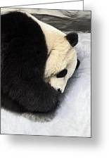 Giant Panda Portrait Greeting Card