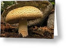 Giant Prince Mushroom Greeting Card