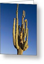 Giant Saguaro Cactus Portrait With Blue Sky Greeting Card