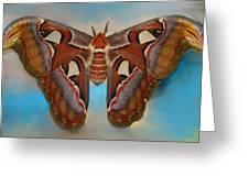 Giant Silk Moth Greeting Card