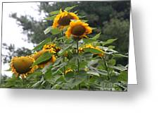 Giant Sunflowers Greeting Card