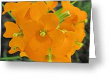 Gifts Of The Wildflower Greeting Card