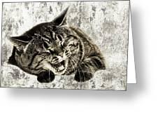Giggle Kitty  Greeting Card