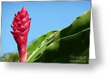 Ginger Flower Greeting Card