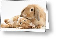 Ginger Kitten Lying With Sandy Lionhead Greeting Card