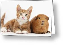 Ginger Kitten With Red Guinea Pig Greeting Card