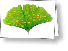 Ginkgo And Network Diagram Greeting Card