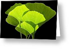 Ginkgo Leaves Greeting Card by Pasieka