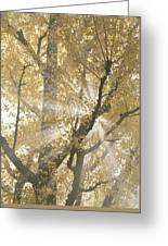 Ginkgo Tree With Sunlight Streaming Greeting Card