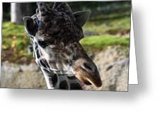 Giraffe - 0001 Greeting Card