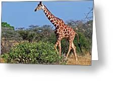 Giraffe Against Blue Sky Greeting Card