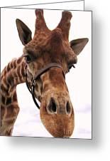 Giraffe Big Nose Greeting Card