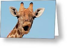 Giraffe Calling Greeting Card