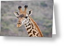 Giraffe Close-up Greeting Card