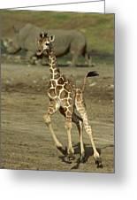 Giraffe Giraffa Camelopardalis Juvenile Greeting Card