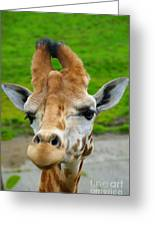 Giraffe In The Park Greeting Card