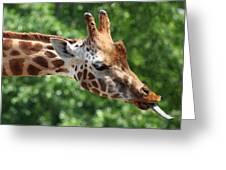 Giraffe's Tongue Greeting Card
