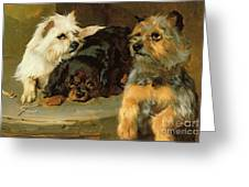 Give A Poor Dog A Bone Greeting Card
