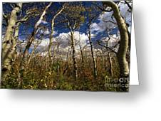 Glacier Aspens Greeting Card