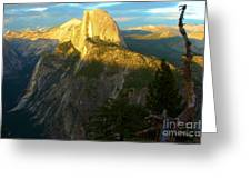 Glacier Point Tree Greeting Card