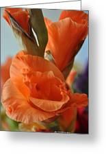 Gladiola Blooms Greeting Card