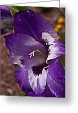 Gladiola Blossom 5 Greeting Card